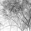 2012_02_29-362-w3-th