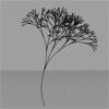 2012_03_14-tree-th